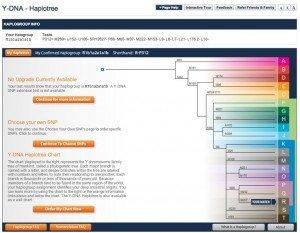 Human Y-DNA Haplotree